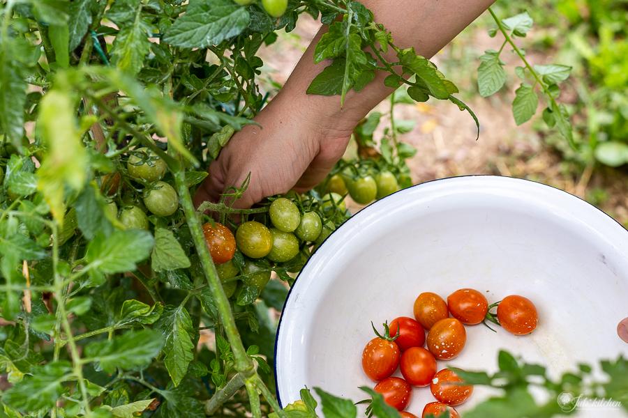 pomodorini nell'orto