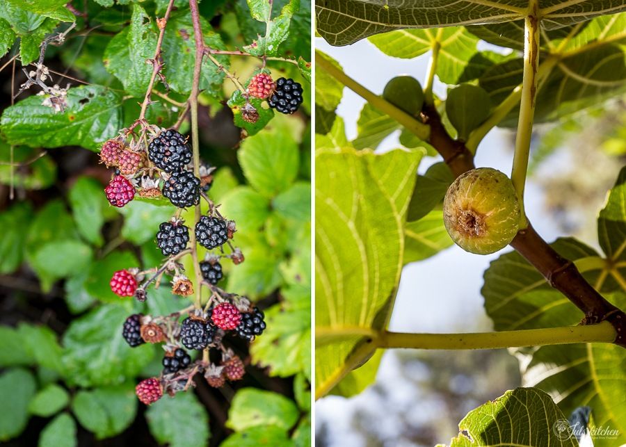 late summer fruit